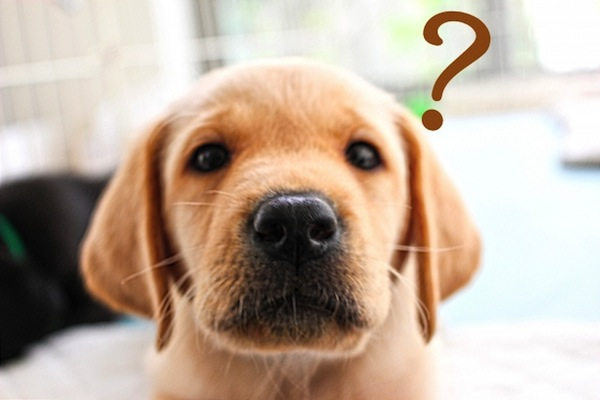 「犬 はてな」の画像検索結果